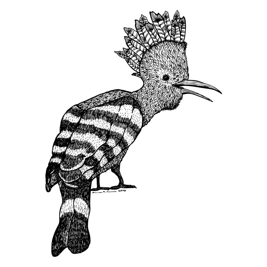 Mohawk Bird Drawing  - Mohawk Bird Fine Art Print