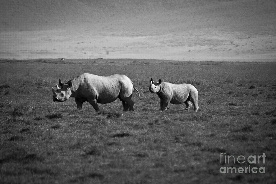 Mom And Child Black Rhinos Photograph