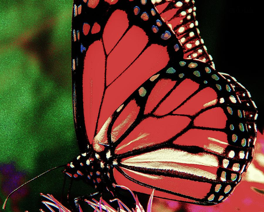 Monarch Graphic Photograph  - Monarch Graphic Fine Art Print