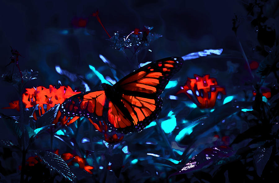 Monarch Of The Night Photograph