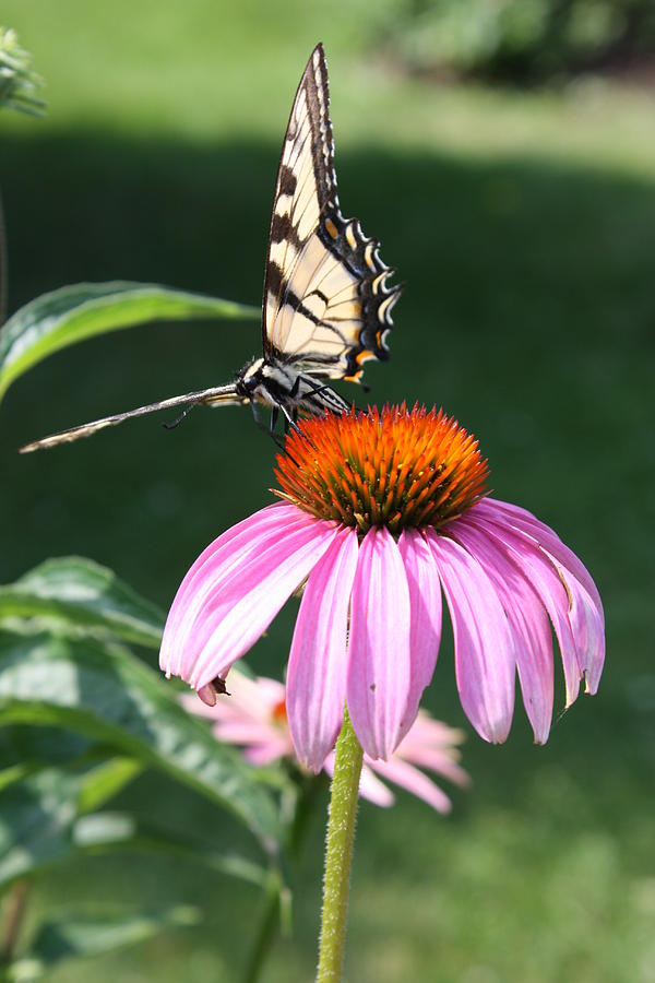 Monarchs Kingdom Photograph