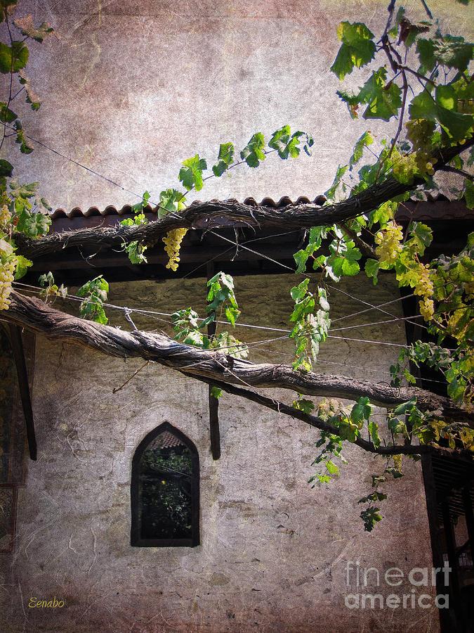 Monastery Garden Photograph