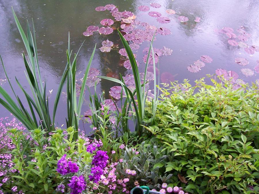 Monet Garden Giverny France Painting  - Monet Garden Giverny France Fine Art Print