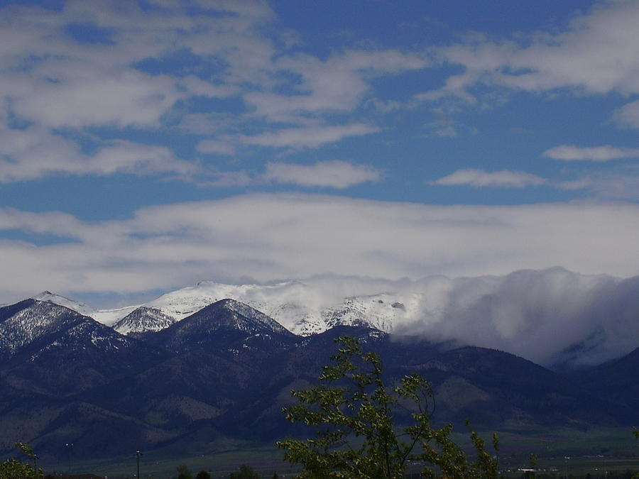 Montana June Photograph