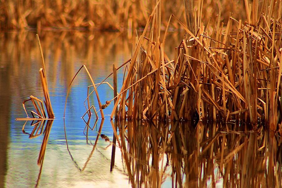 Montana Peace Pond Photograph
