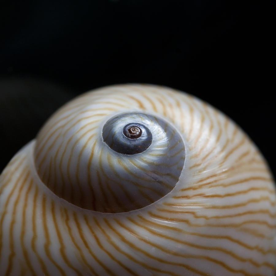 Moon Photograph - Moon Shell by Carol Leigh