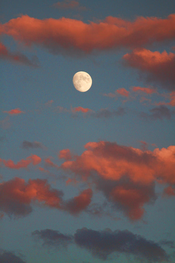 Moon Sunset Vertical Image Photograph  - Moon Sunset Vertical Image Fine Art Print