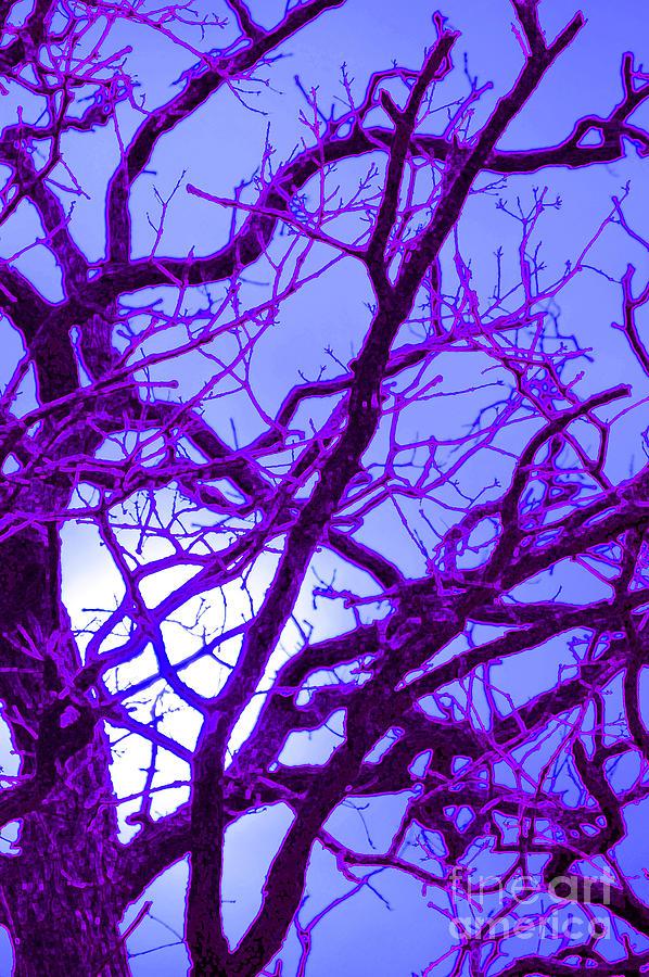 Moon Tree Purple Photograph