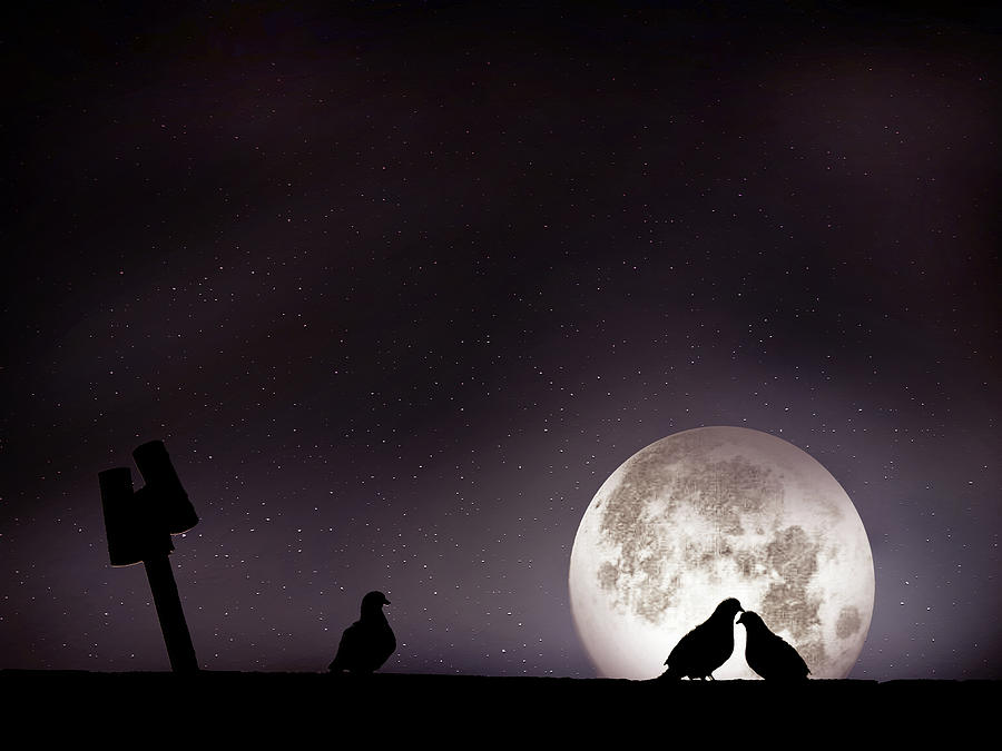 Moon With Love Pigeon Photograph  - Moon With Love Pigeon Fine Art Print
