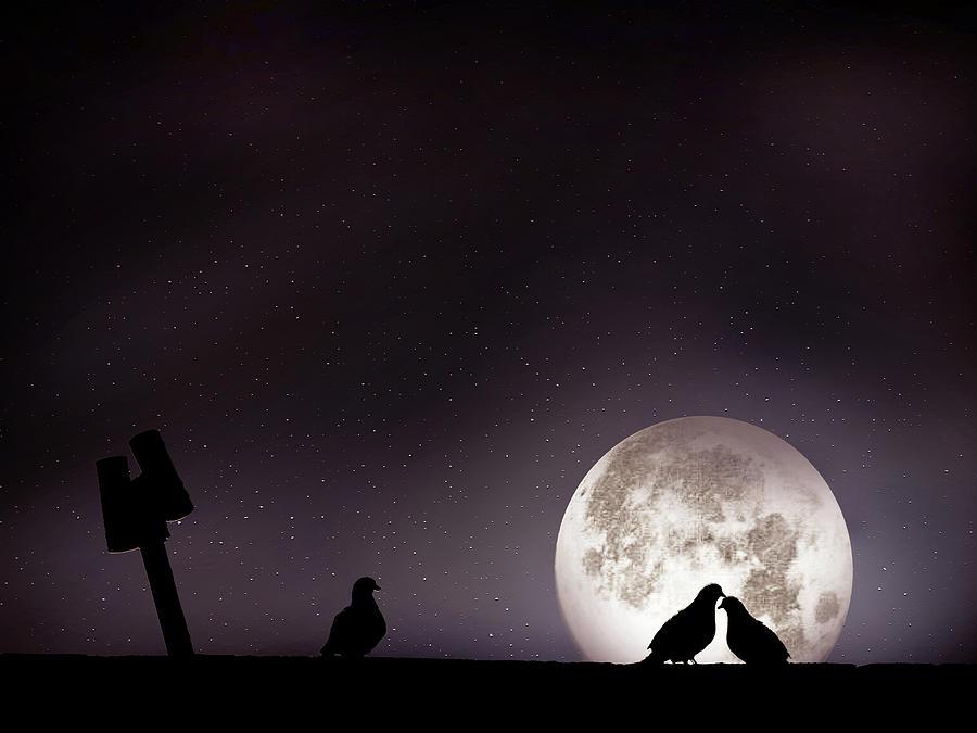 Horizontal Photograph - Moon With Love Pigeon by Mhd Hamwi
