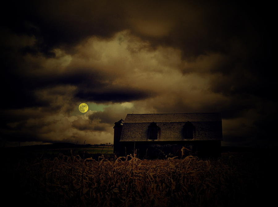 Mooned  Photograph  - Mooned  Fine Art Print