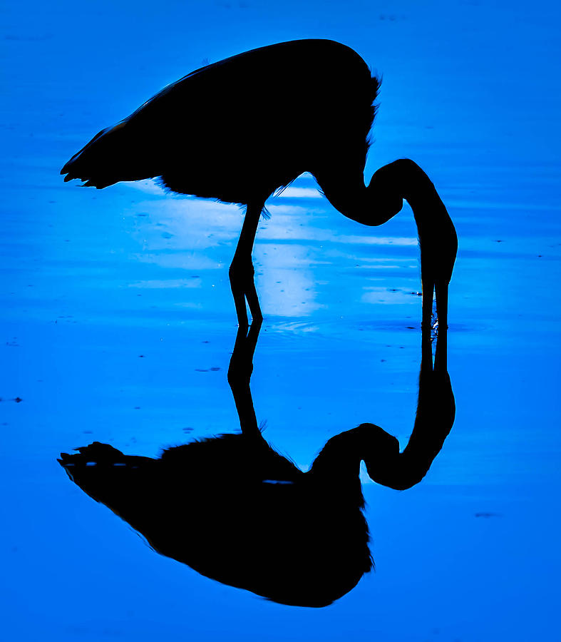 Moonlight Heron Photograph