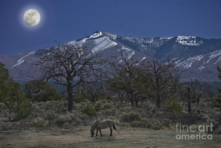Moonlight Horse Photograph