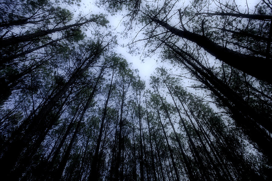 Moonlite Forest Photograph