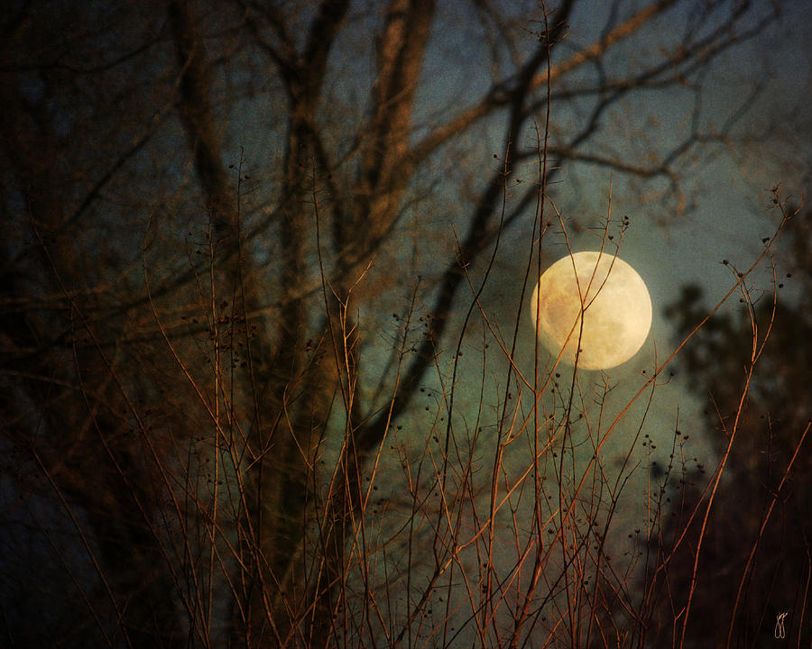 Moonrise Photograph by Jai Johnson