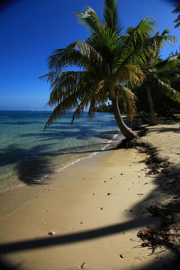 Moorea Beach Palm Photograph