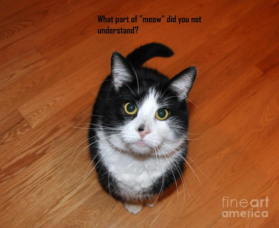 More Words From  Teddy The Ninja Cat Photograph  - More Words From  Teddy The Ninja Cat Fine Art Print