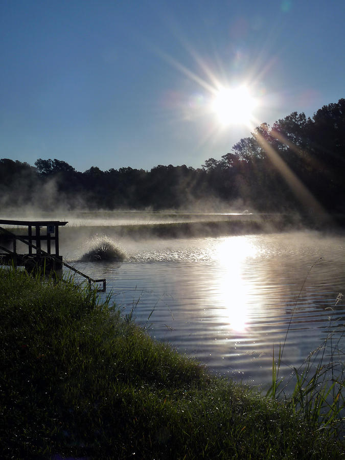 Water Photograph - Morning At The Fish Hatchery by Terry Eve Tanner