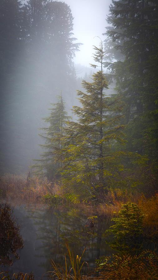 Morning Fall Colors Photograph