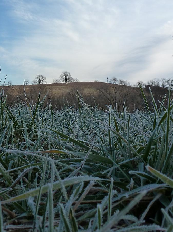 Morning Frost Photograph