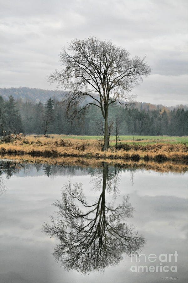 Morning Haze And Reflections Photograph  - Morning Haze And Reflections Fine Art Print