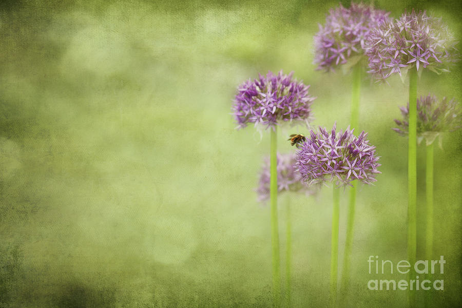 Morning In The Garden Photograph  - Morning In The Garden Fine Art Print