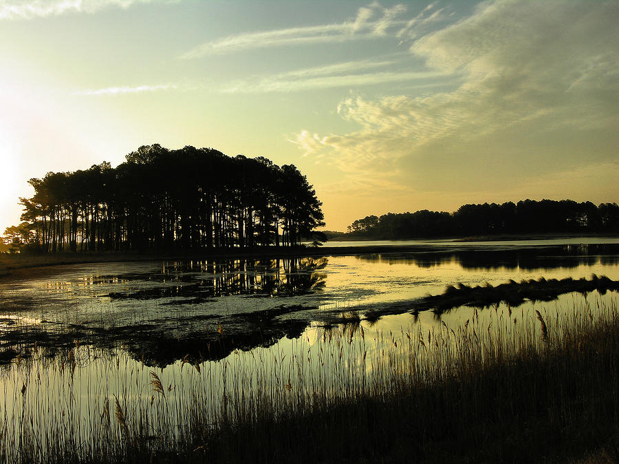 Morning On Assateague Island Photograph  - Morning On Assateague Island Fine Art Print