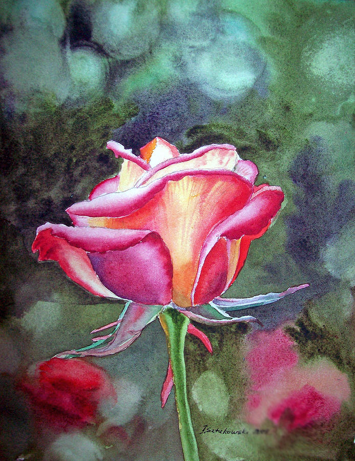 Morning Rose Painting  - Morning Rose Fine Art Print