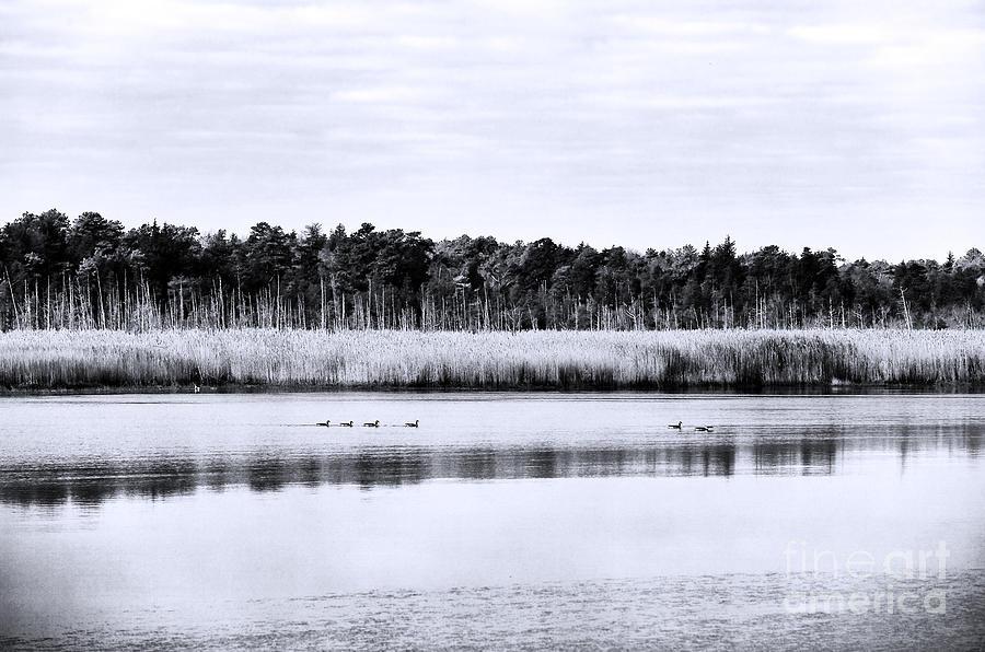 Morning Swim Photograph - Morning Swim by John Rizzuto