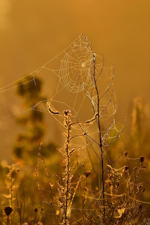 Petrie Island Photograph - Morning Web by Joshua McCullough
