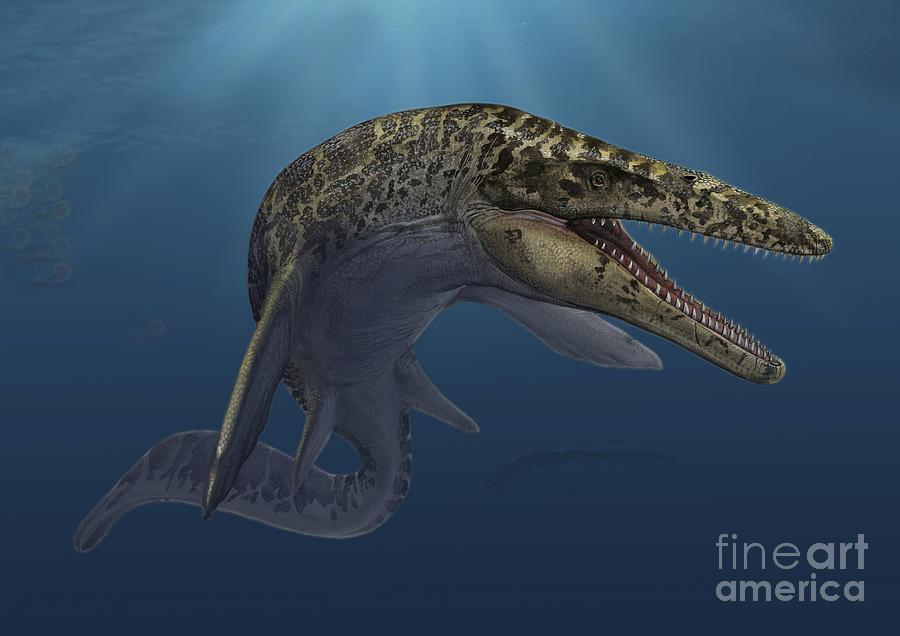 Mosasaurus Hoffmanni Swimming Digital Art