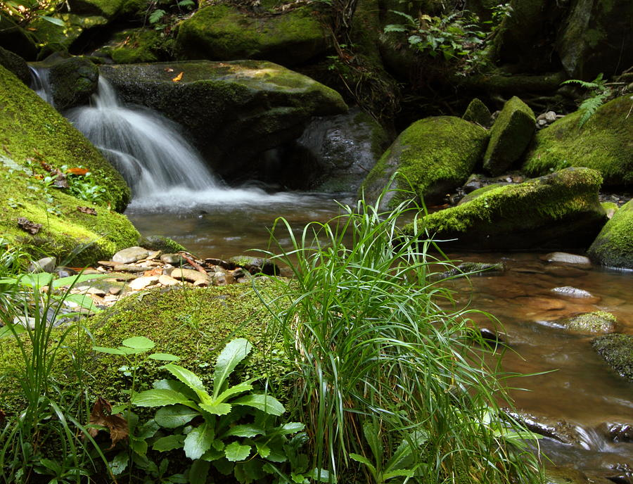 Moss And Water And Ambience Photograph