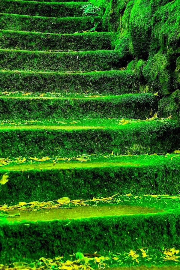 Carpet Moss Adaptations Deciduous Forest Carpet Vidalondon