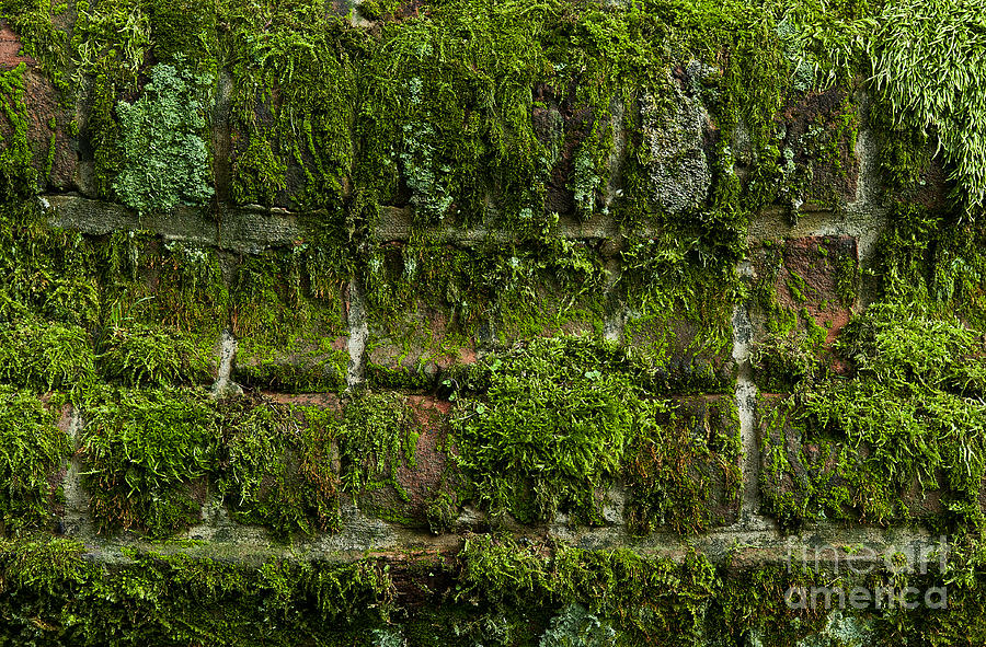 Moss Covered Wall Photograph By John Greim