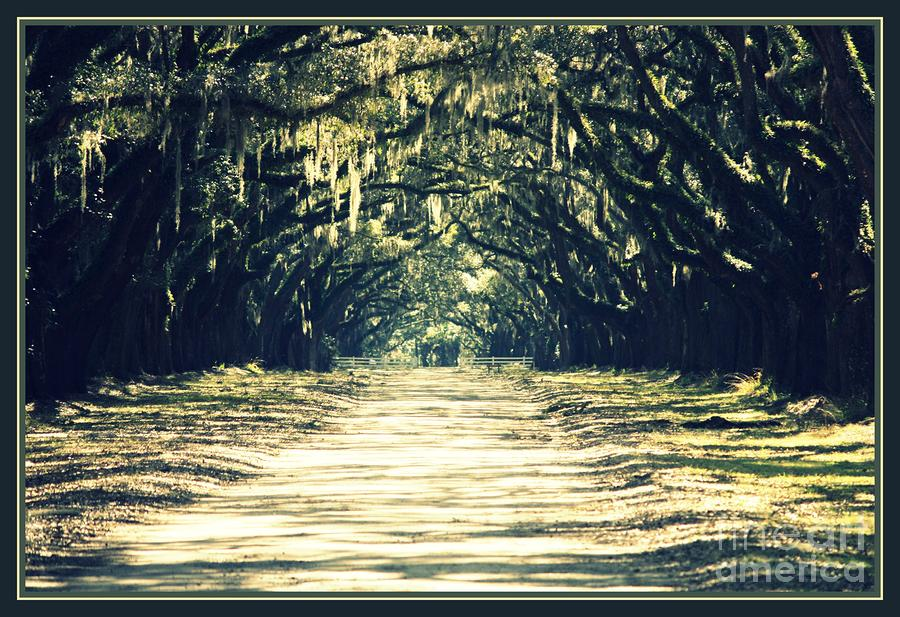 Moss Green Road Photograph  - Moss Green Road Fine Art Print
