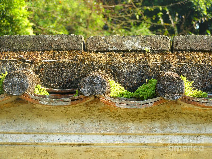Moss On An Old Chinese Roof Photograph  - Moss On An Old Chinese Roof Fine Art Print