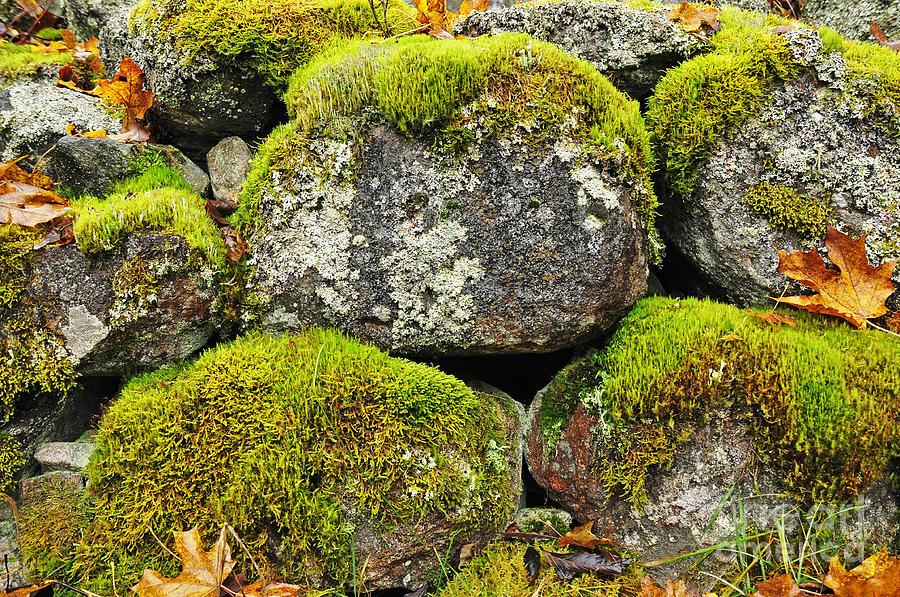 Moss On Stone Pyrography