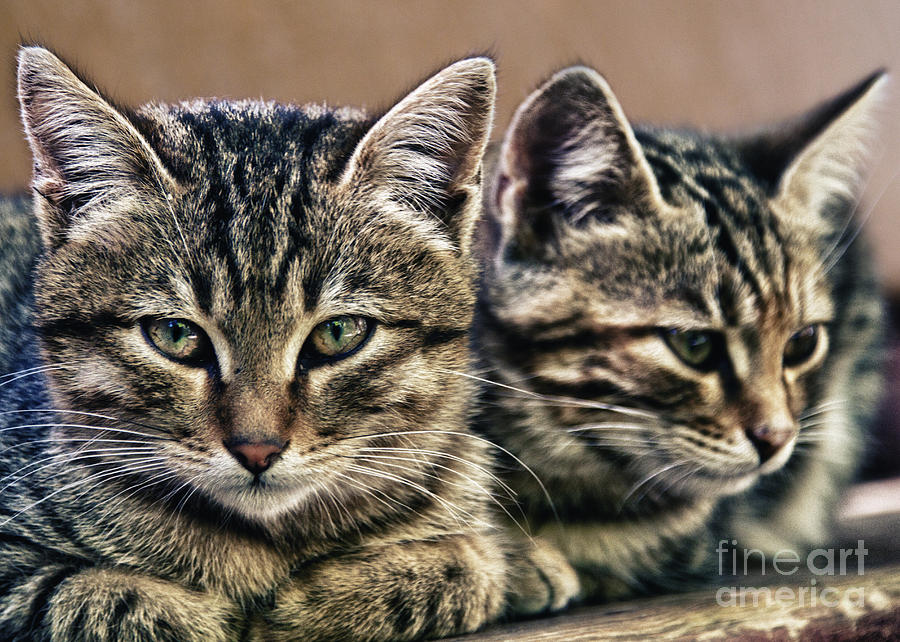 Mother And Child Wild Cats Photograph