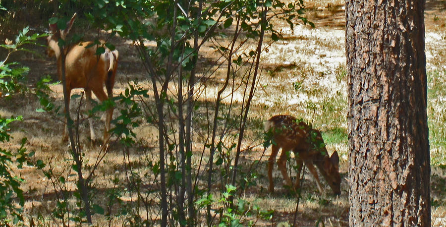 Mother And Fawn Photograph  - Mother And Fawn Fine Art Print