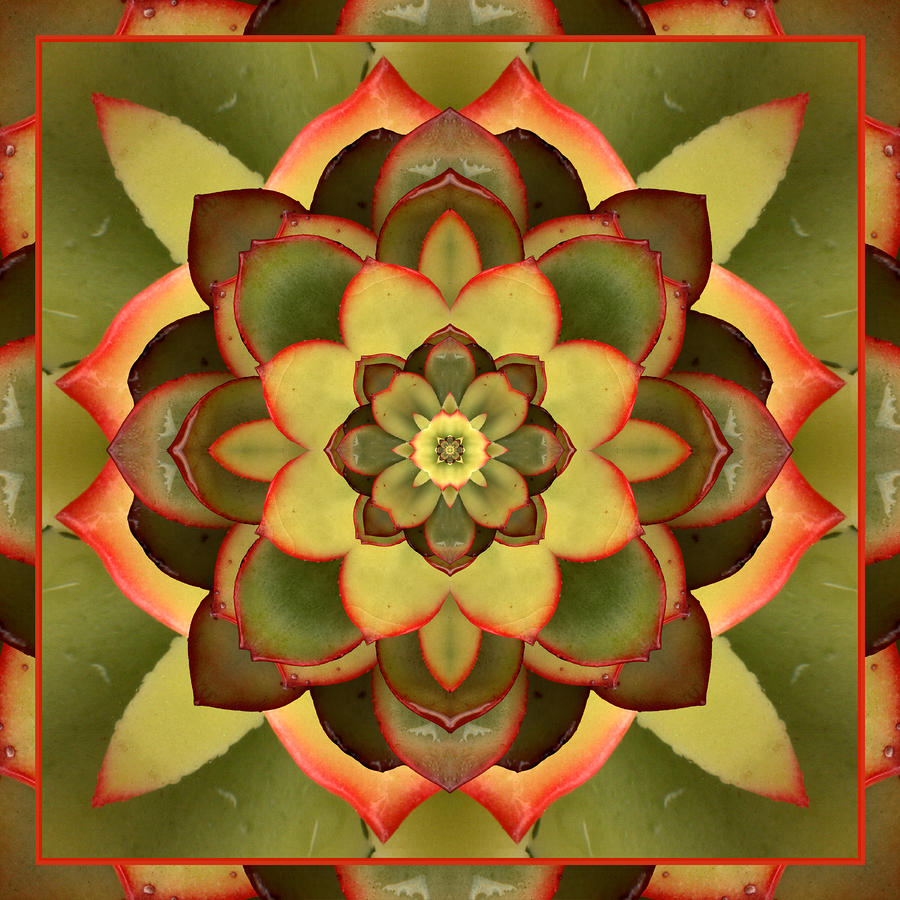 Mother Lotus Photograph