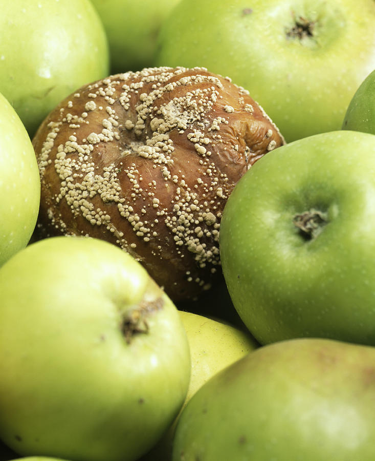 Food Spoilage Photograph - Mouldy Apple by Sheila Terry