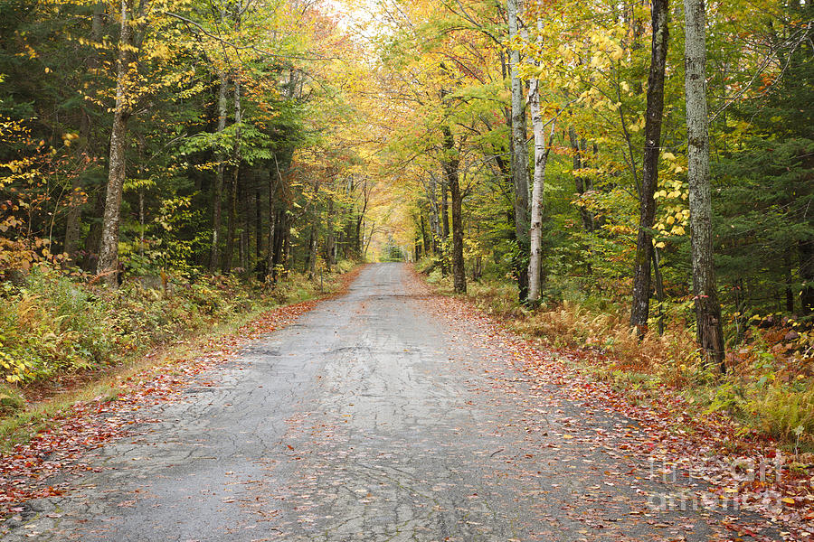 Mount Clinton Road - Beans Grant New Hampshire Photograph  - Mount Clinton Road - Beans Grant New Hampshire Fine Art Print