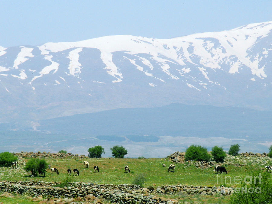 Mount Hermon Photograph