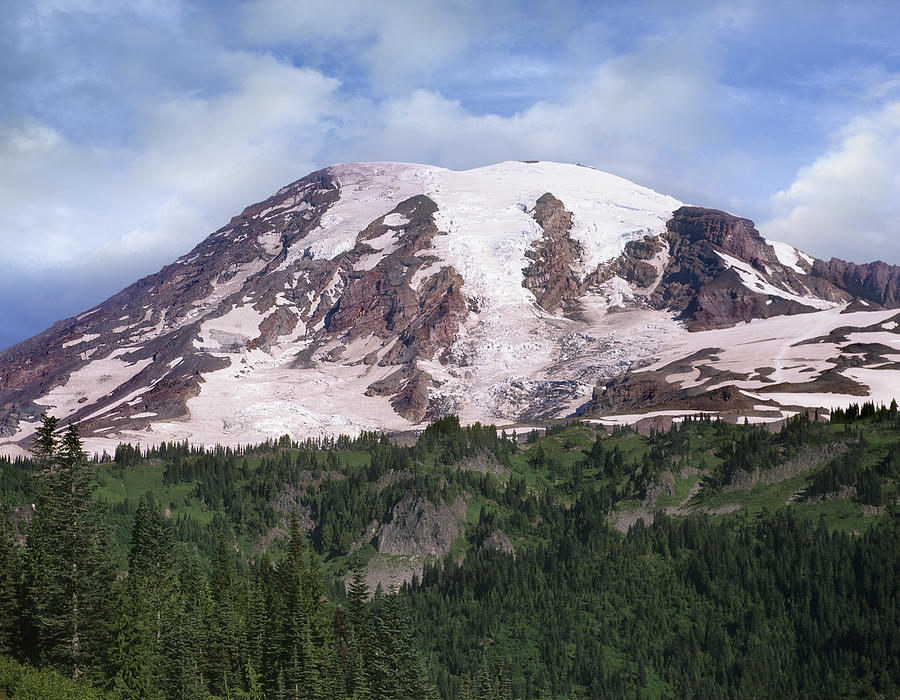 00177105 Photograph - Mount Rainier With Coniferous Forest by Tim Fitzharris