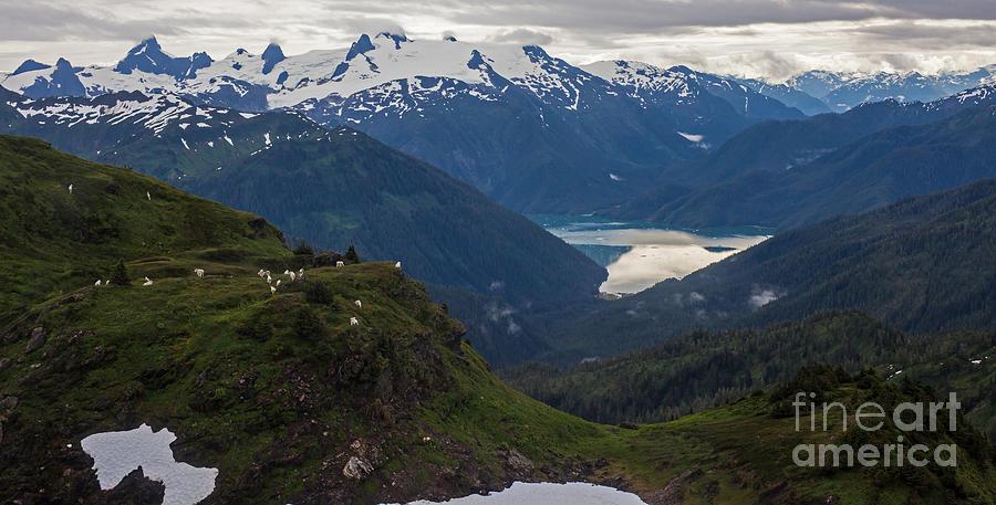 Mountain Flock Photograph