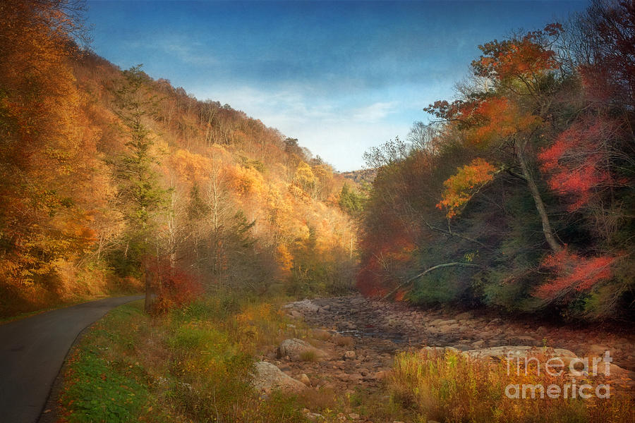 Mountain Forest Creek Bed Photograph  - Mountain Forest Creek Bed Fine Art Print
