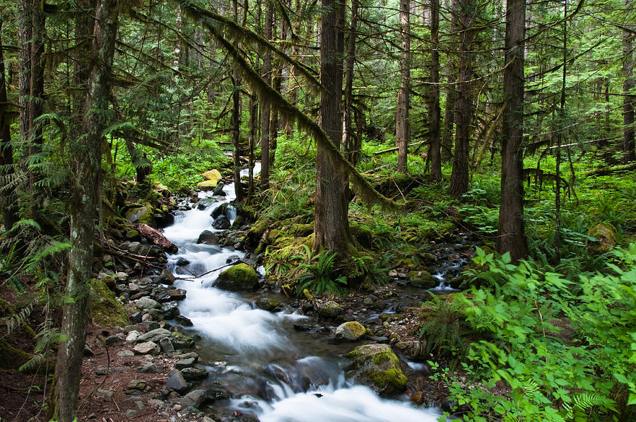 Mountain Forest Stream Photograph by Denise Lett