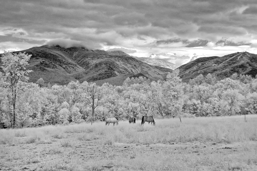 Mountains Photograph - Mountain Grazing by Joann Vitali