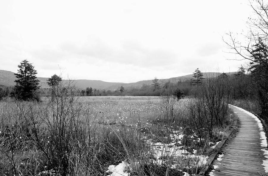 Mountain Meadow In Black And White Photograph  - Mountain Meadow In Black And White Fine Art Print