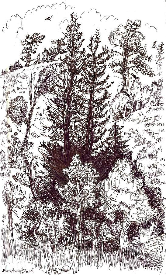 Mountain Pines And Aspen Field Sketch Drawing